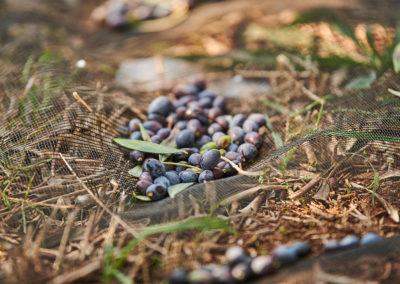 vergal_olives